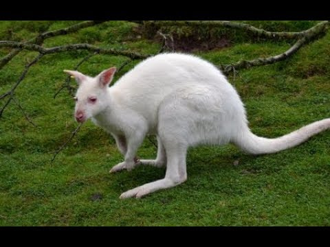 The weirdest place on earth Tasmania - Sir David Attenborough - New BBC Documentary 2019  HD 1080p