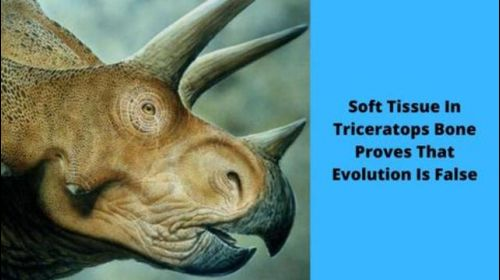 Soft Tissue In Triceratops Bone Proves That Evolution Is False