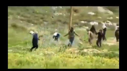 israeli terrorist settlers attack an old Palestinian man on his own land